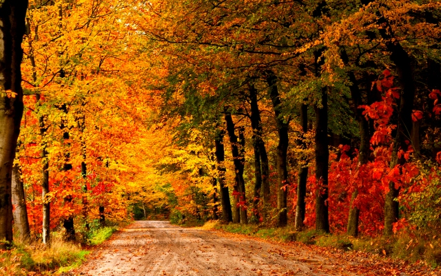6969840-country-road-autumn