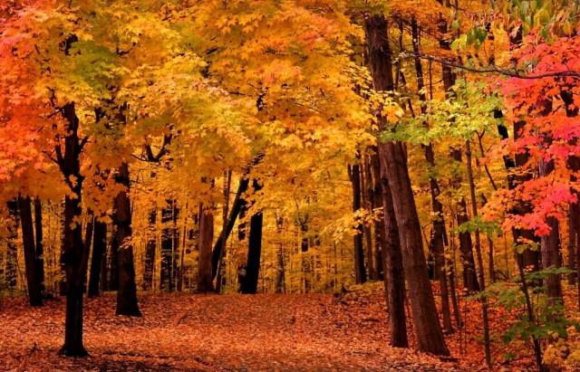 fall-foliage_13120268-1667x2592-1024x658