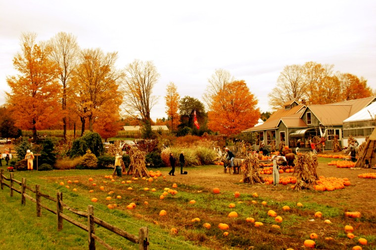 Pumpkin Farm, Champlaine Valley, Vt